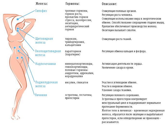 kakie-analizy-sdayut-na-gormony