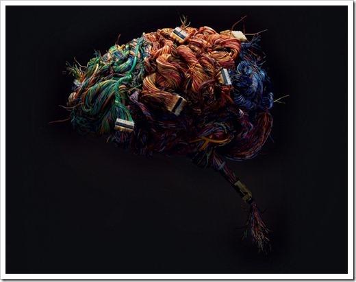 Сопоставимые площади поверхностей переднего мозга и мозжечка