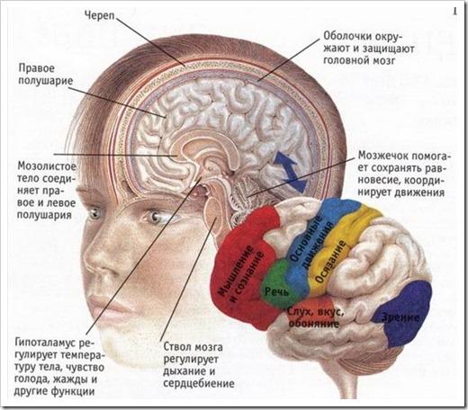 Все чувства зарождаются в одной части мозга