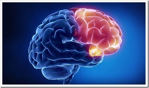 Сложное строение и складки мозга